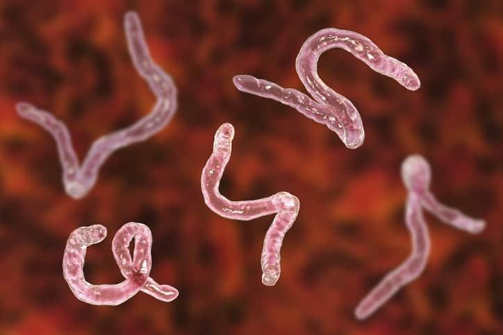 combatte i vermi parassiti